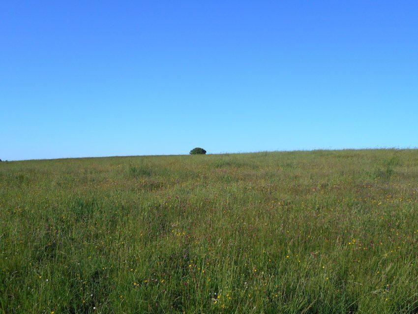 l'albero solitario in mezzo al prato enorme come si vede nella foto google