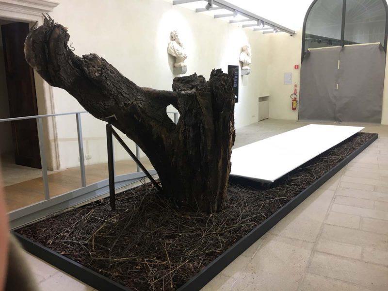 2020-allestimento-mostra-palazzo-roncale-rovigo-querciadidante-51